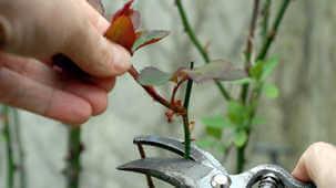 accident liés au jardinage